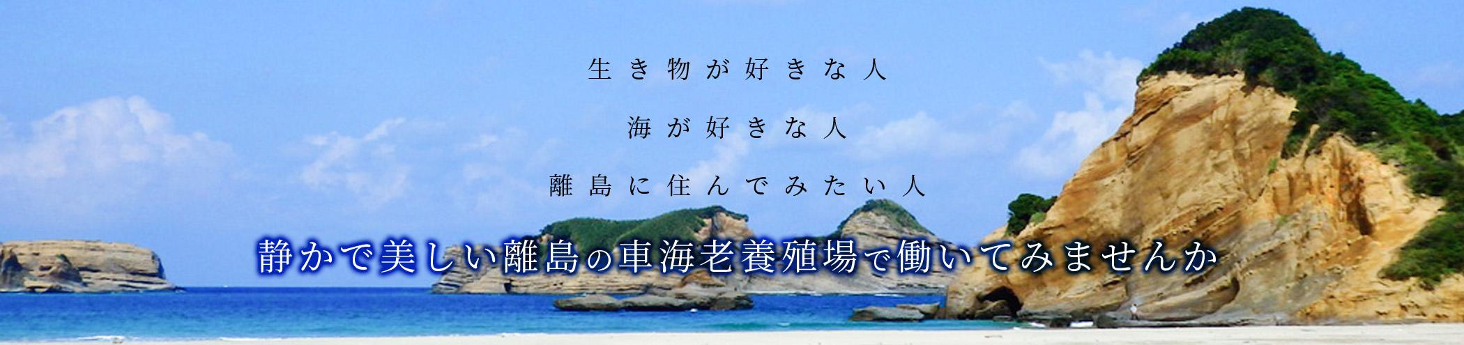 saiyou_header.jpg